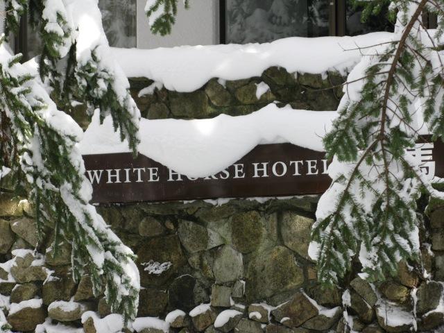 Arctic White Horse