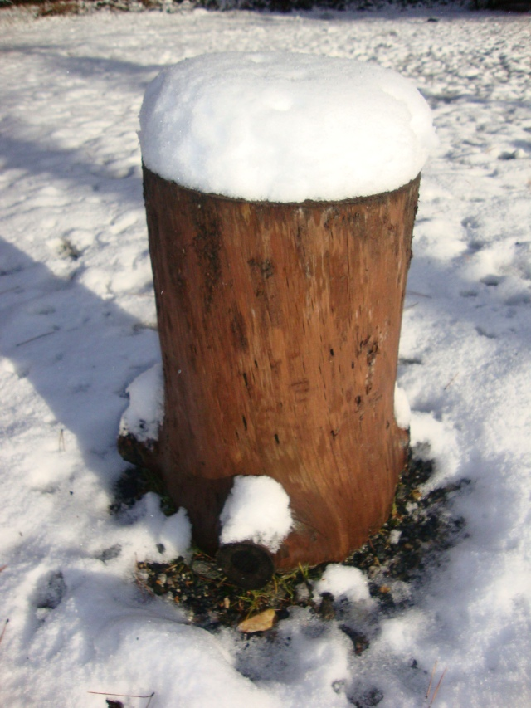 The snow is back in Hakuba