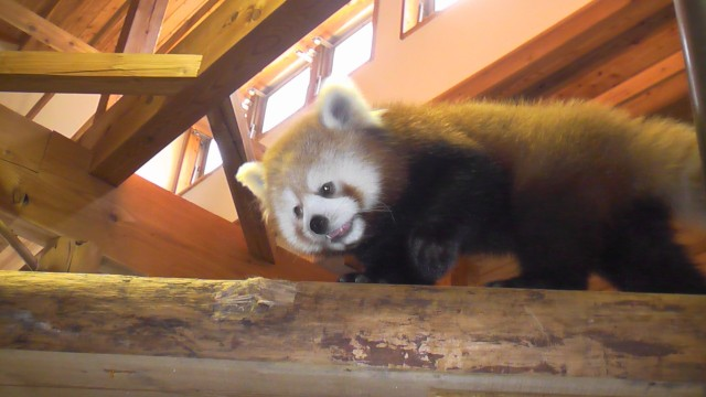 Nagano Zoo