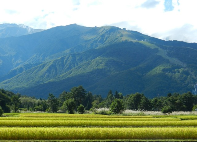 Hakuba fields